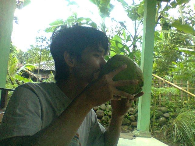 kelapa muda seger